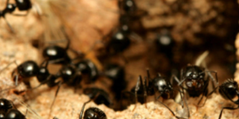 Small Ants Pest Control