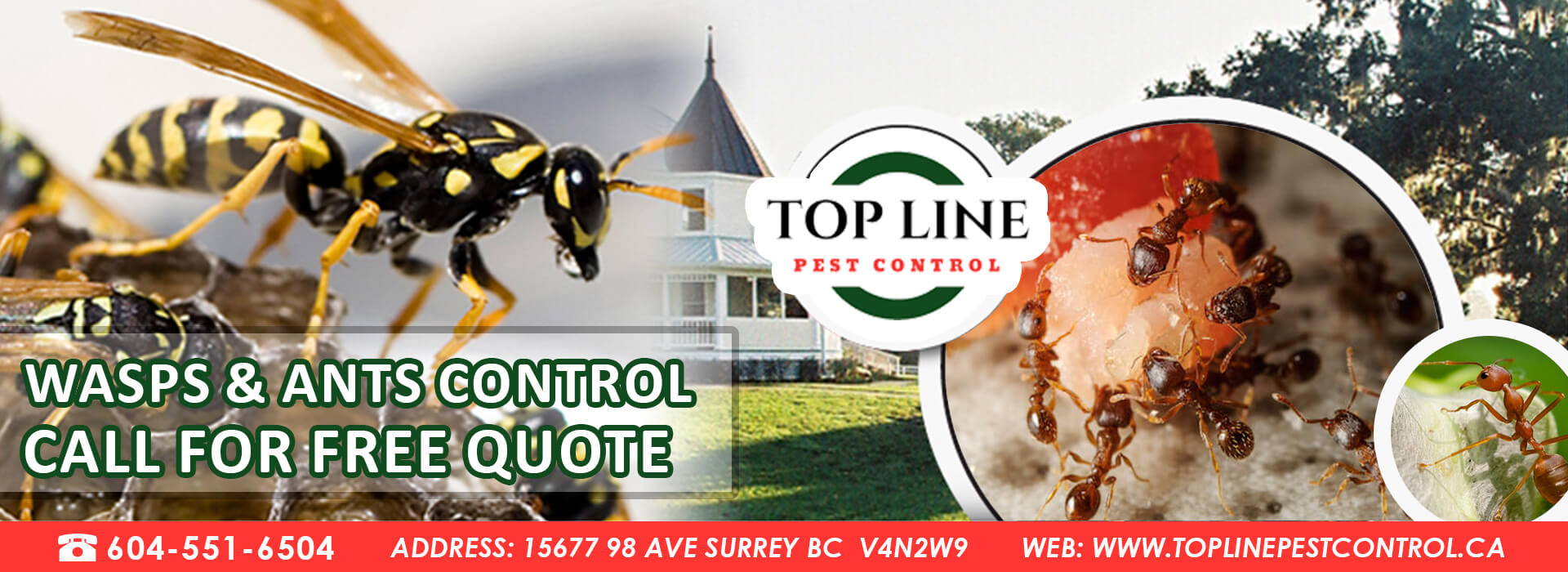 wasps & ants control