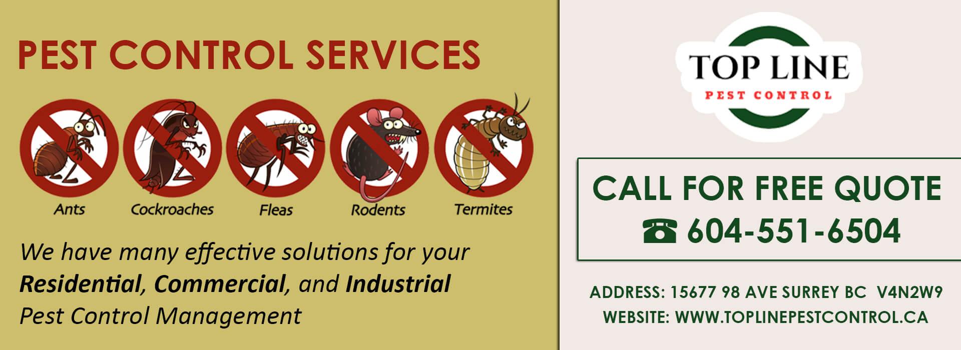 Pest Control Services Surrey