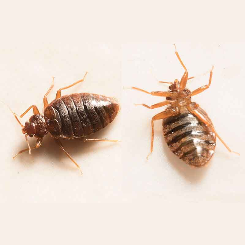 Topline Pest Control