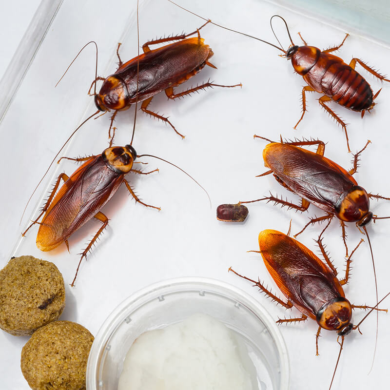 cockroach control services in surrey