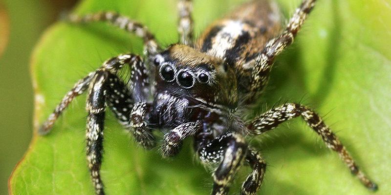 spider control services in surrey