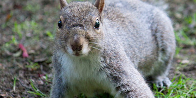 squirrel control services in surrey