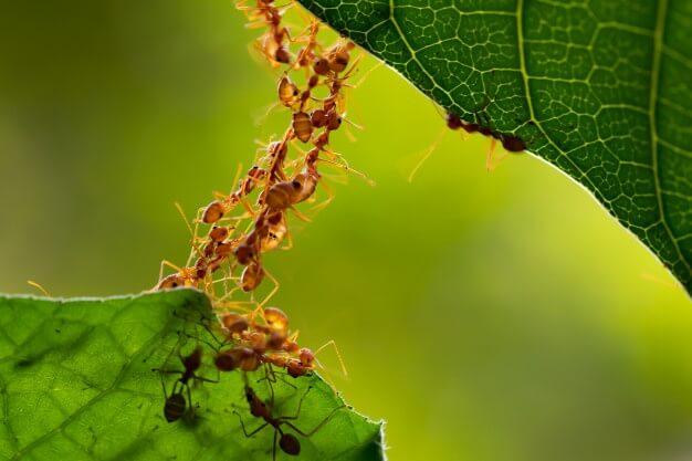 Ants Pest Control Langley