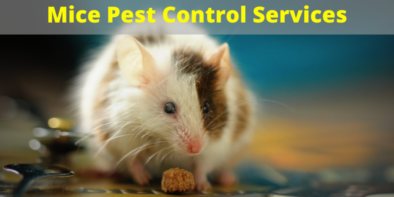 mice control services surrey