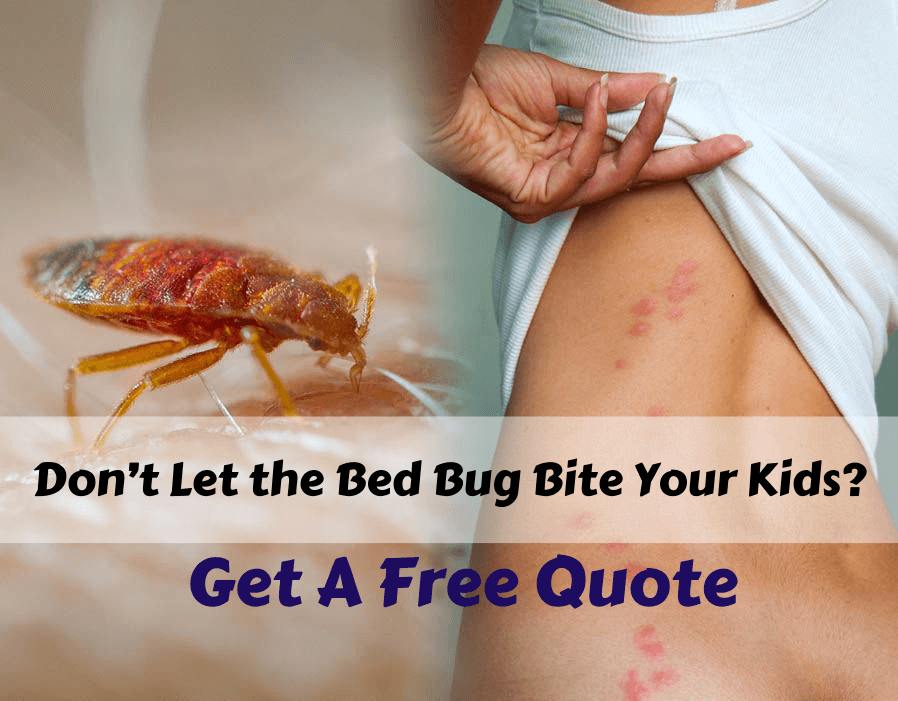 bed bug exterminator surrey