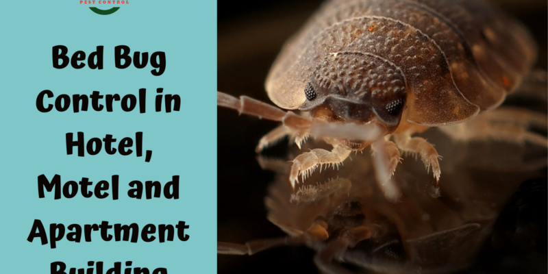 Bed Bug Exterminators surrey
