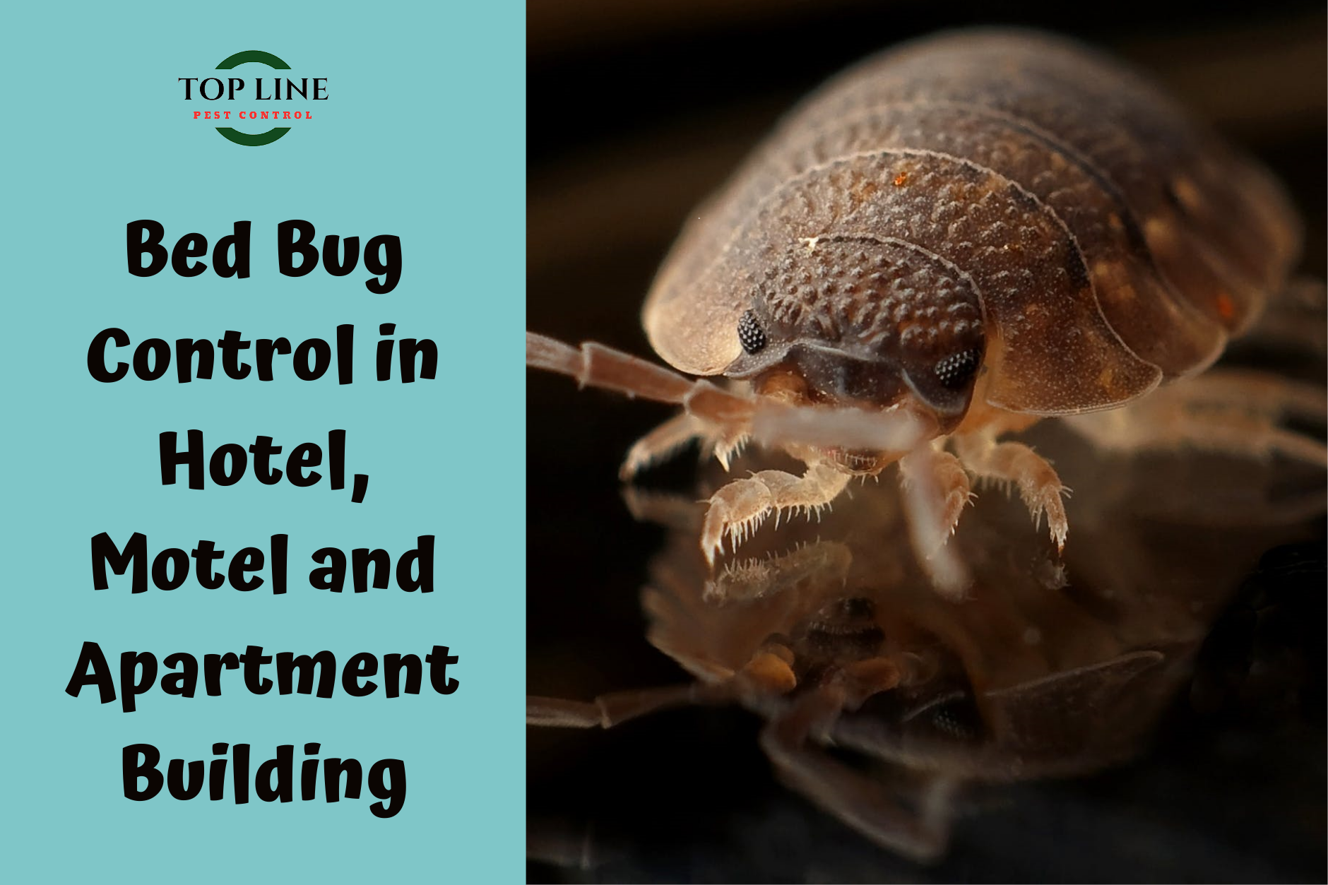 Bed Bug Exterminators surrey