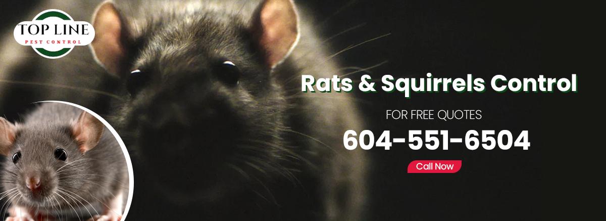 rat and Squirrel control surrey