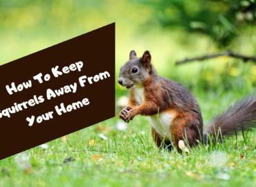 squirrel removal surrey