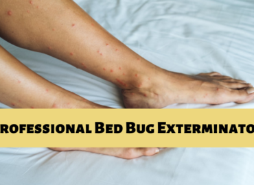 bed bug control in Langley
