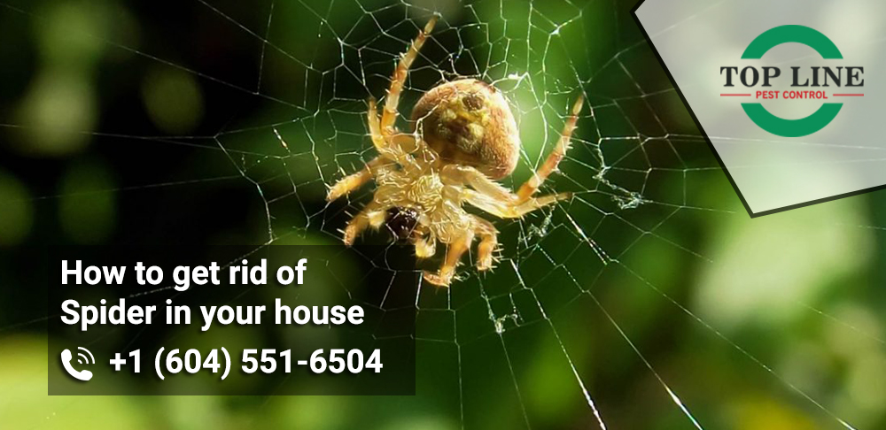 Get rid of spider in your house