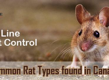 rat types canada
