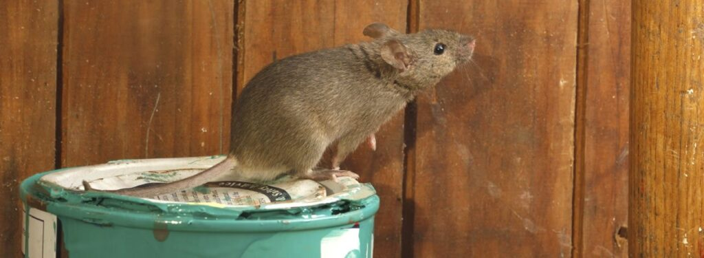 Control Rodents