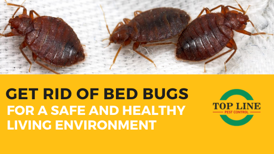 Get rif of bed bugs