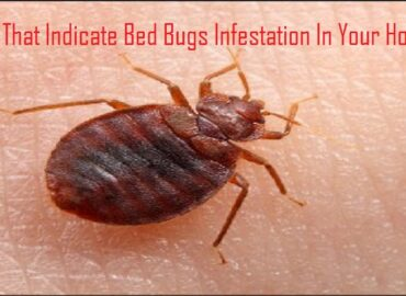 Signs That Indicate Bed Bugs Infestation In Your Home